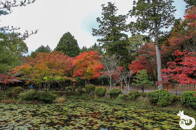 大原野神社 鯉沢池