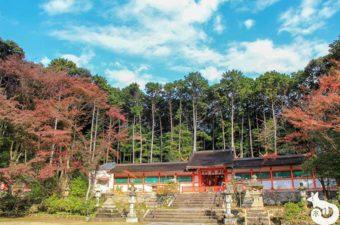 大原野神社の紅葉を見に行ってきた|混雑状況や見どころを写真で紹介