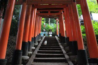 【京都】写真展「岩合光昭の世界ネコ歩き2」の2018年の開催情報