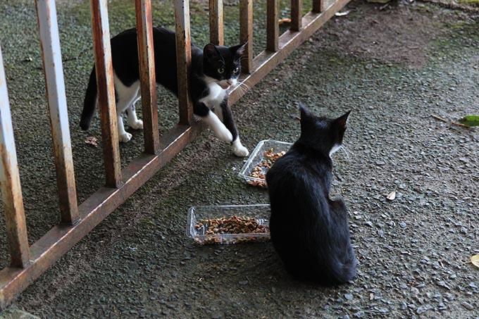 餌を食べている猫