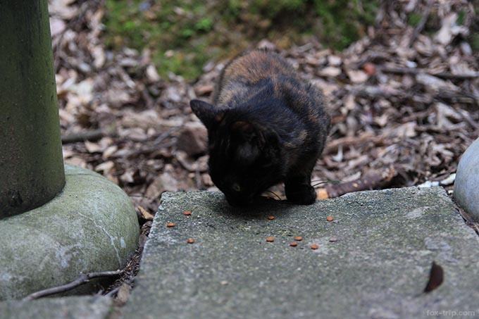 餌を食べている子猫