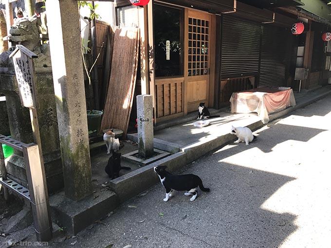おくむら前にいる猫