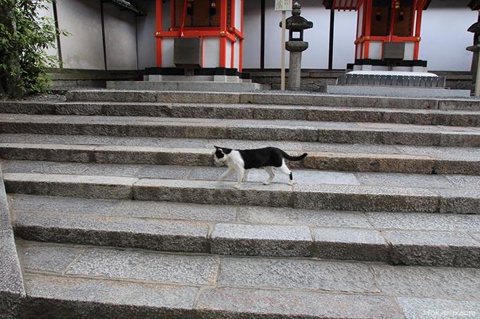 本殿近くの猫