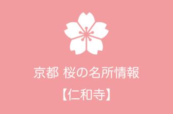 仁和寺の桜情報|2019年の開花予想から例年の見頃時期まで