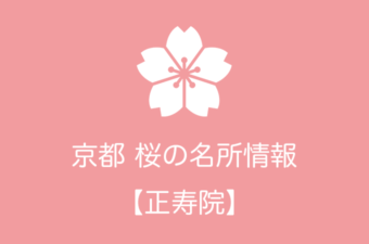 正寿院の桜情報|2019年の開花予想から例年の見頃時期まで