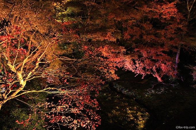 瑠璃の庭の紅葉