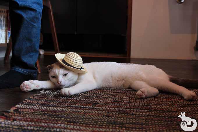 麦わら帽子をかぶった豆もちくん
