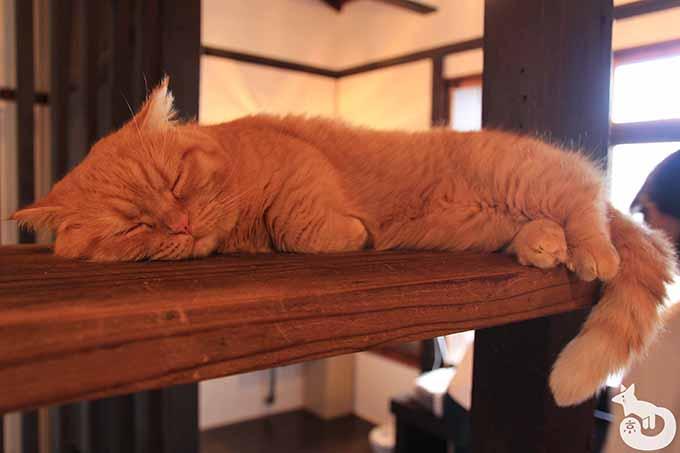 寝ているウニちゃん