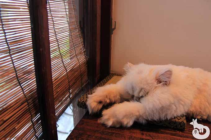 窓際で寝ているココちゃん