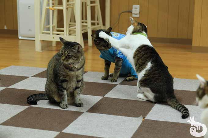 ケンカしている猫たち
