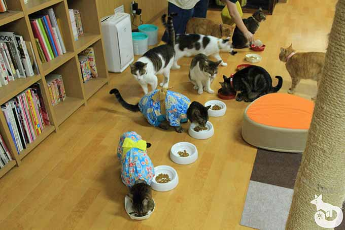 猫たちのご飯タイム