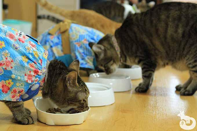 ご飯を食べる猫たち