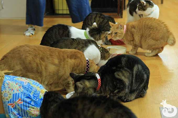 店の猫たち