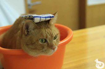 【京都 猫カフェ】ねこ会議体験レポ|混雑状況やアクセス