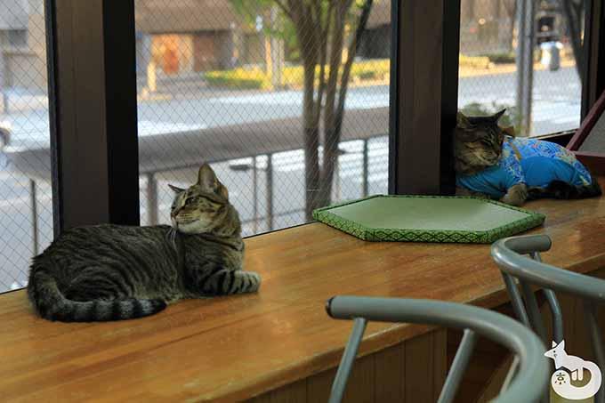 窓際にいるキジトラ猫たち