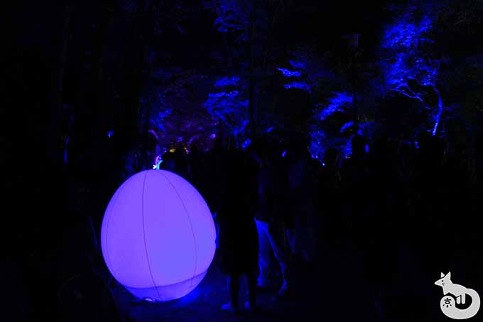 光の玉(紫)