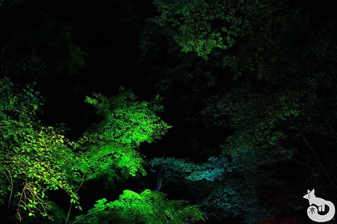 もみじのライトアップ(緑)