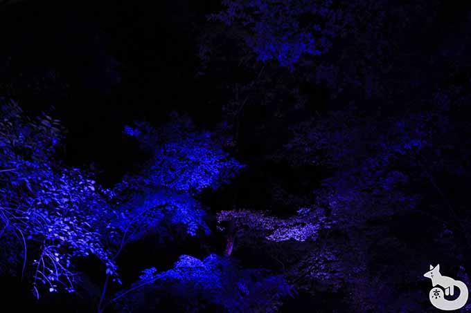 もみじのライトアップ(青)