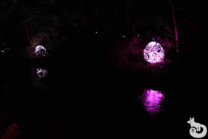 泉川付近のライトアップ