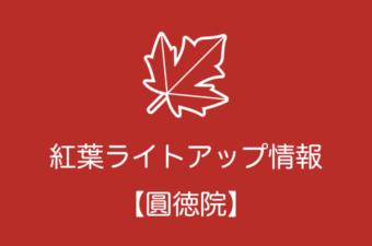 圓徳院の紅葉ライトアップ情報|2018年の開催日程