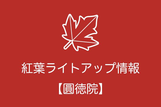 圓徳院の紅葉ライトアップ情報|2019年の開催日程