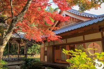 勝持寺の紅葉を見に行ってきた|混雑状況や見どころを写真で紹介