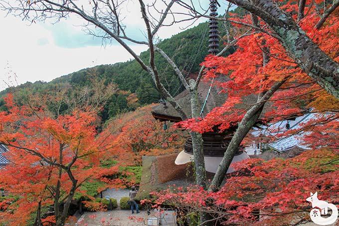 多宝塔周辺の紅葉