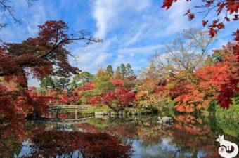 永観堂の紅葉を見に行ってきた|混雑状況や見どころを写真で紹介