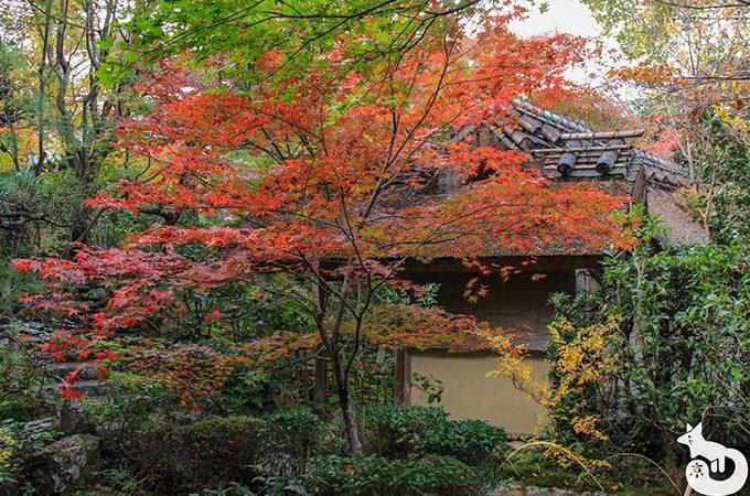 厭離庵の紅葉を見に行ってきた|混雑状況や見どころを写真で紹介