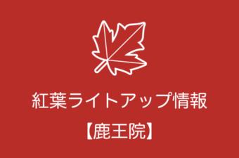 鹿王院の紅葉ライトアップ情報|2018年の開催日程