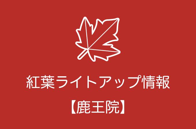 鹿王院の紅葉ライトアップ情報|2019年の開催日程