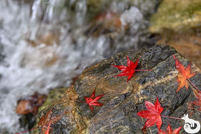 紅葉のじゅうたんを楽しむ 京都散りもみじの名所特集!