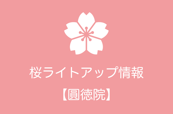 圓徳院の桜ライトアップ情報|2019年の開催日程
