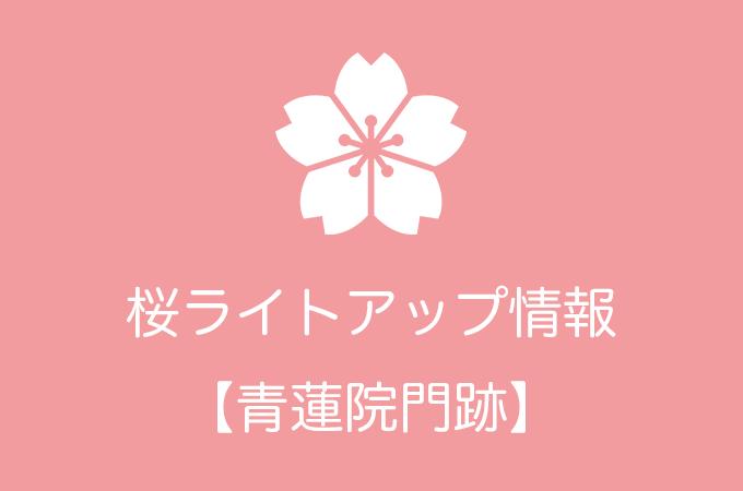 青蓮院門跡の桜ライトアップ情報|2019年の開催日程