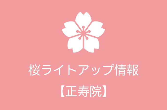 正寿院の桜ライトアップ情報|2019年の開催日程