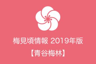青谷梅林の梅情報2019|見頃の時期および開花情報