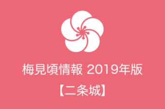 二条城の梅情報2019|見頃の時期および開花情報