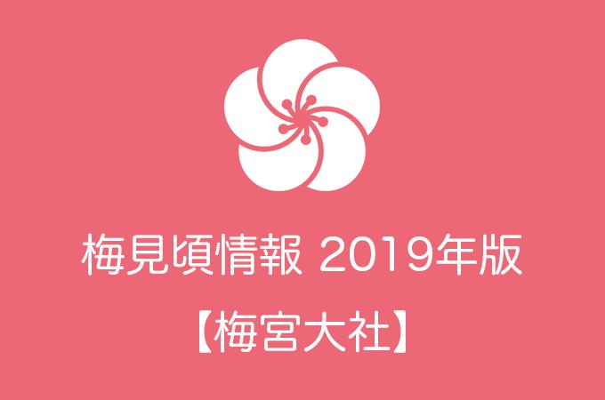 梅宮大社の梅情報2019|見頃の時期および開花情報
