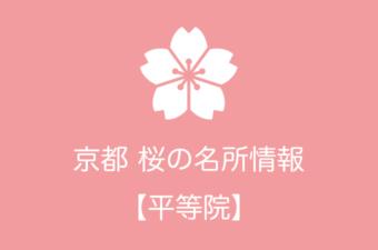 平等院の桜情報|2019年の開花予想から例年の見頃時期まで