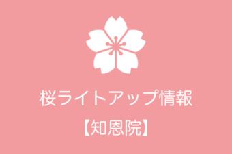 知恩院の桜ライトアップ情報|2019年の開催日程