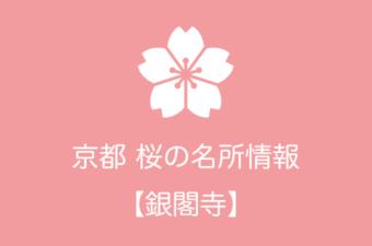 銀閣寺の桜情報2019
