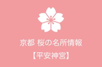 平安神宮の桜情報|2019年の開花予想から例年の見頃時期まで