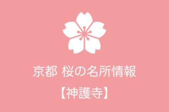 神護寺の桜情報|2019年の開花予想から例年の見頃時期まで