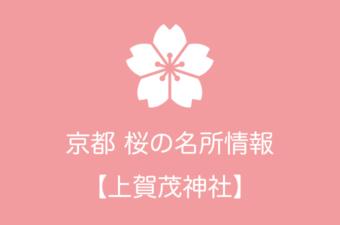 上賀茂神社の桜情報|2019年の開花予想から例年の見頃時期まで