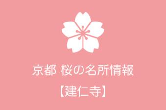 建仁寺の桜情報 2019年の開花予想から例年の見頃時期まで