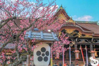 北野天満宮に梅を見に行ってきた|混雑状況や見どころを写真で紹介