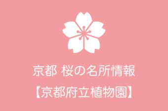 京都府立植物園の桜情報|2019年の開花予想から例年の見頃時期まで
