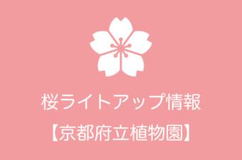 京都府立植物園の桜ライトアップ情報|2019年の開催日程