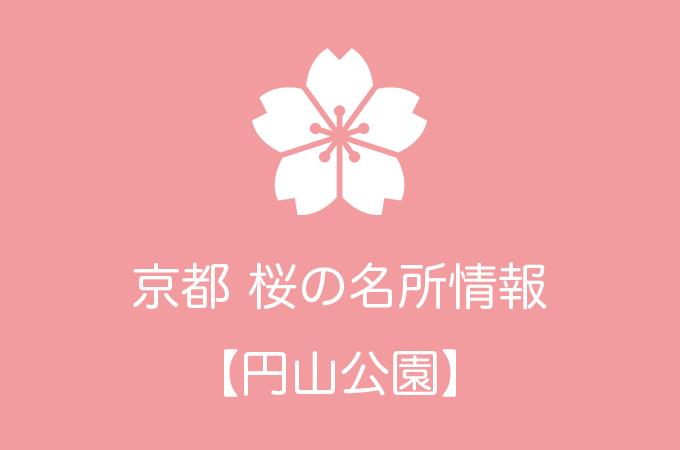 円山公園の桜情報 2019年の開花予想から例年の見頃時期まで