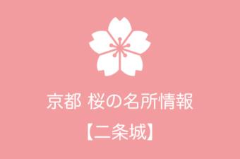 二条城の桜情報|2019年の開花予想から例年の見頃時期まで